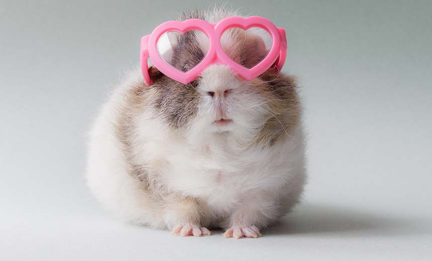 Ever Seen Guinea Pigs So Adorable? Booboo And Friends Are This Photographer's Dream Muses.