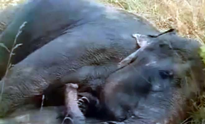 Two Elephants Reunited After More Than 20 Years. The Most Touching Moment And I Cried Like A Baby At The End.