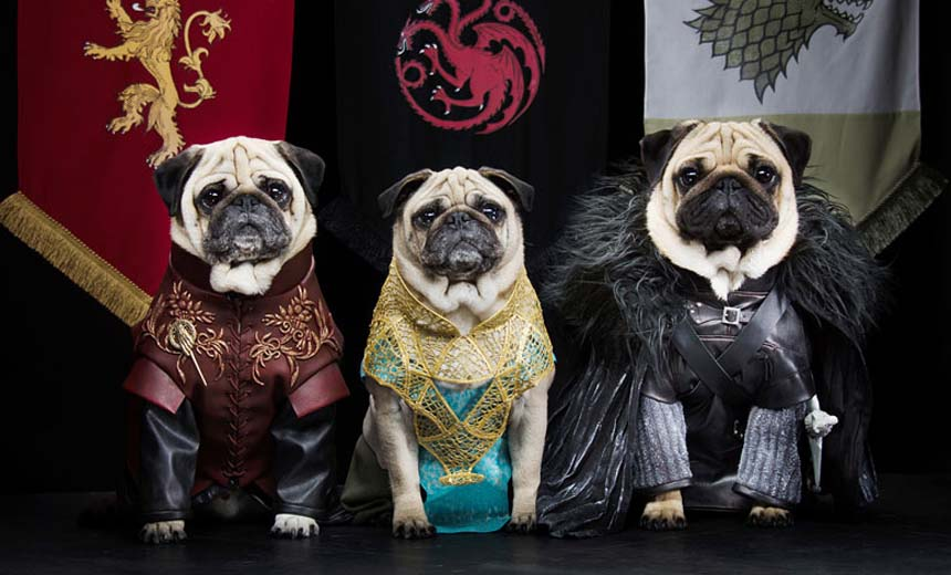 Watch These 3 Pugs Re-enact Scenes From The Game Of Thrones as The Pugs Of Westeros.