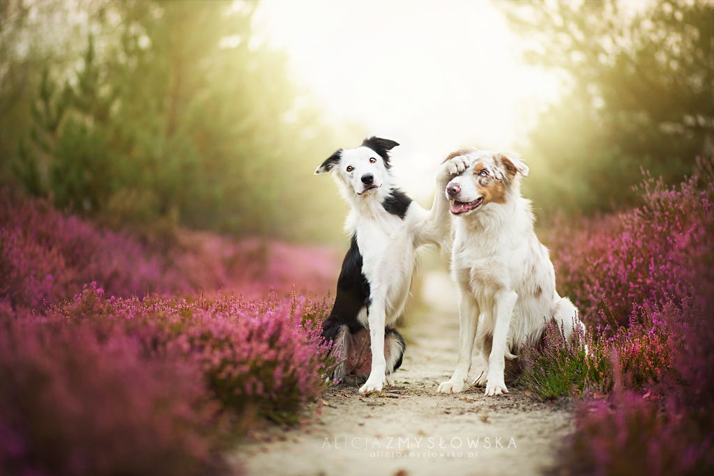 Magical Photos of Dogs! #3 will Surely Amaze You.