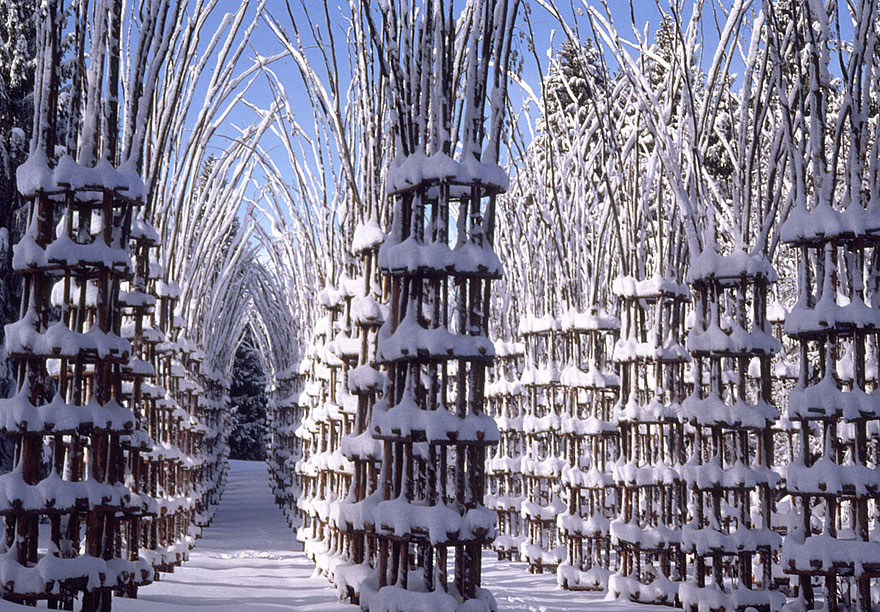 Cathedral Made Out of Living Trees. A Breathtaking Architecture is Now Growing, Literally!