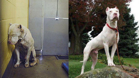This Dog  Beats ALL Odds And Survives, Thanks To Some Wonderful Human Beings