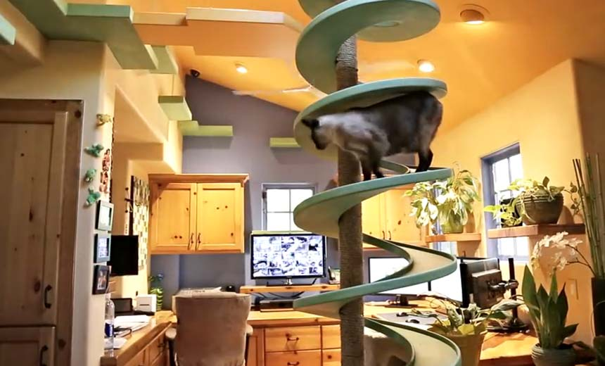 Cat People Rejoice! This Incredible House is a Cat's Dream Playland