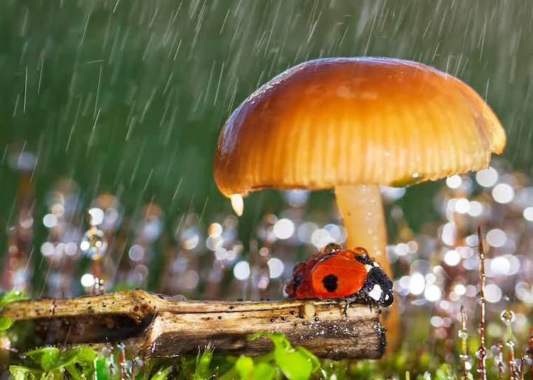 Macro Photos of the Tiniest Wet Ladybugs—They Look Like They Stepped Out of a Fairy Tale!