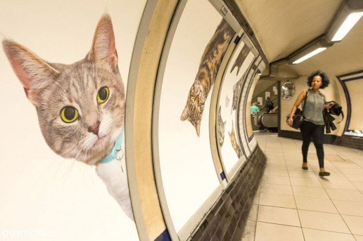 Cat Photos Replaced Ads Inside London Subway Station