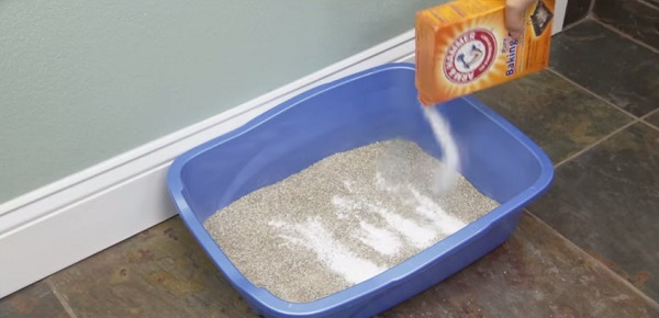Deodorizing the cat litter
