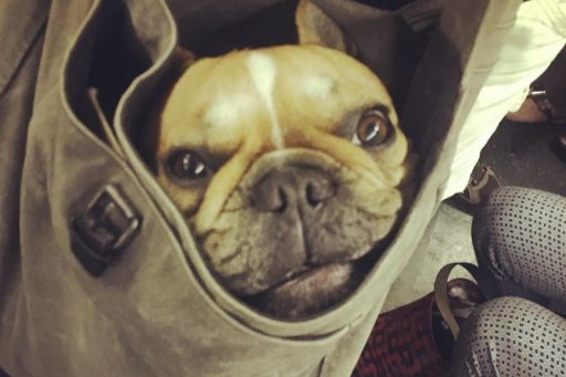 These Dog Owners Have Mastered Fitting Their Big Dogs into a Bag for a Ride on the NYC Subway